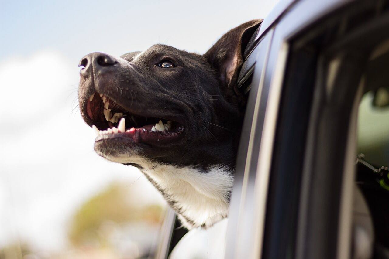 Your Guide To Animal-Related Accidents