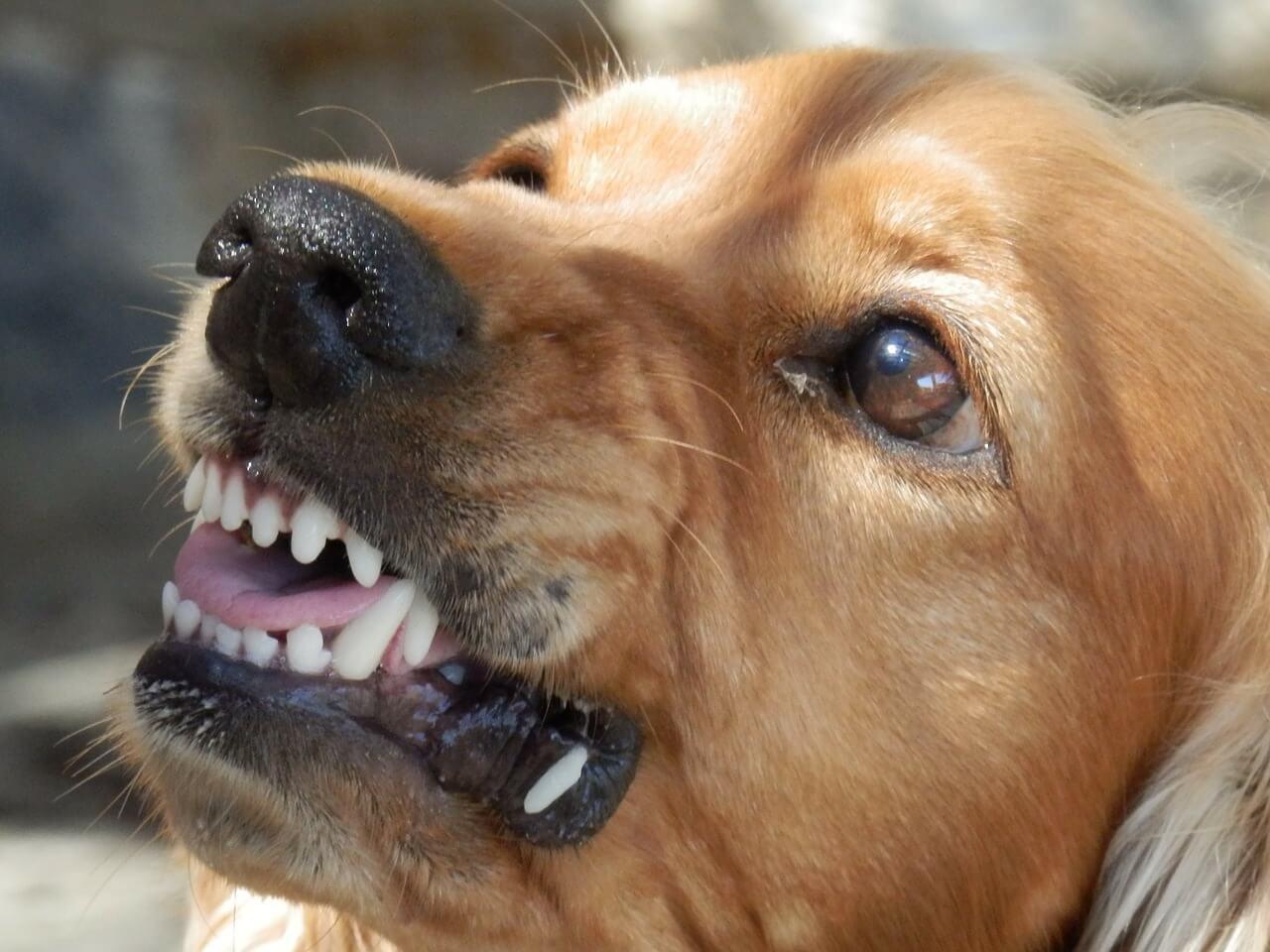 Dog Bite Injury Case Weighed Pt. 2
