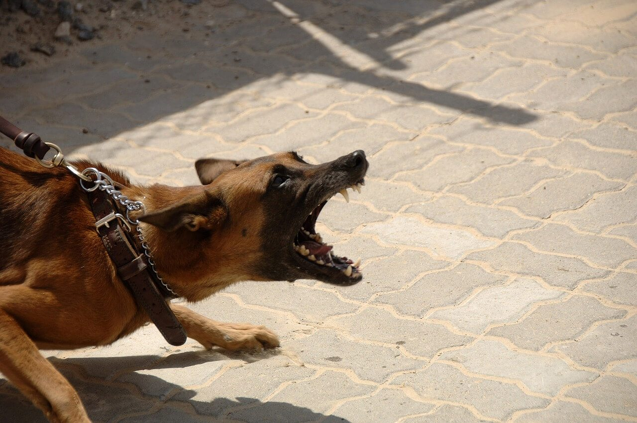 Dog Bite Injury Case Weighed Pt. 1