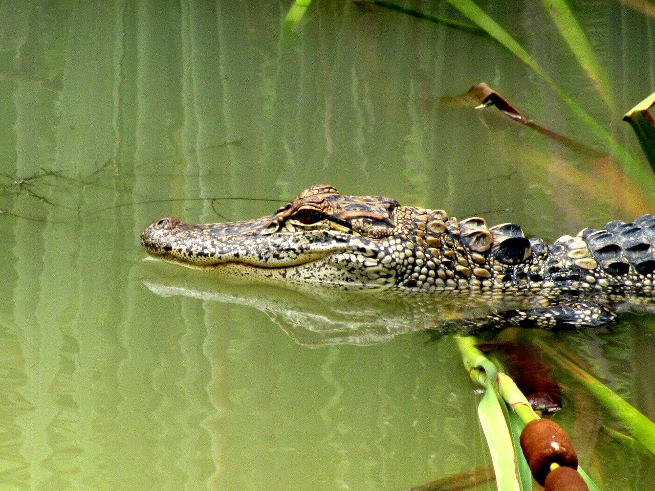 Alligator Alley Guardrails Criticized
