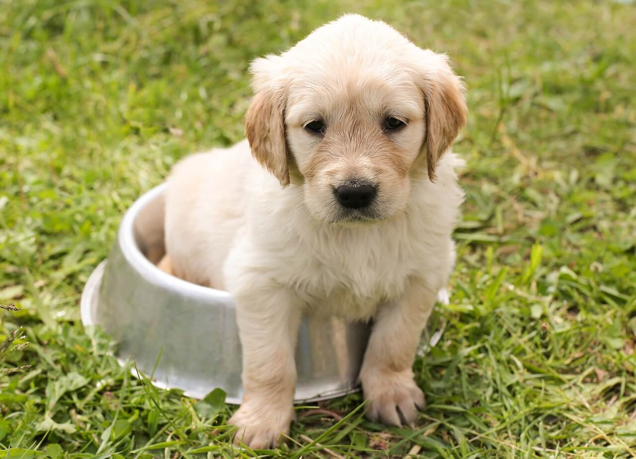 Welcoming Your New Pup Safely into Your Home